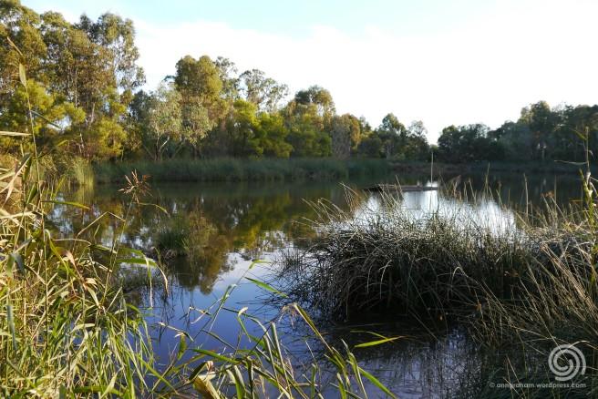 Wetlands Whitespace