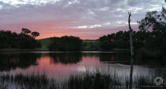 Dawn over Wetlands