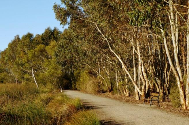 Wetlands Path