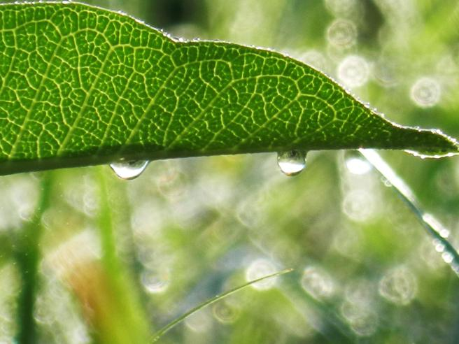 Dew and leaf