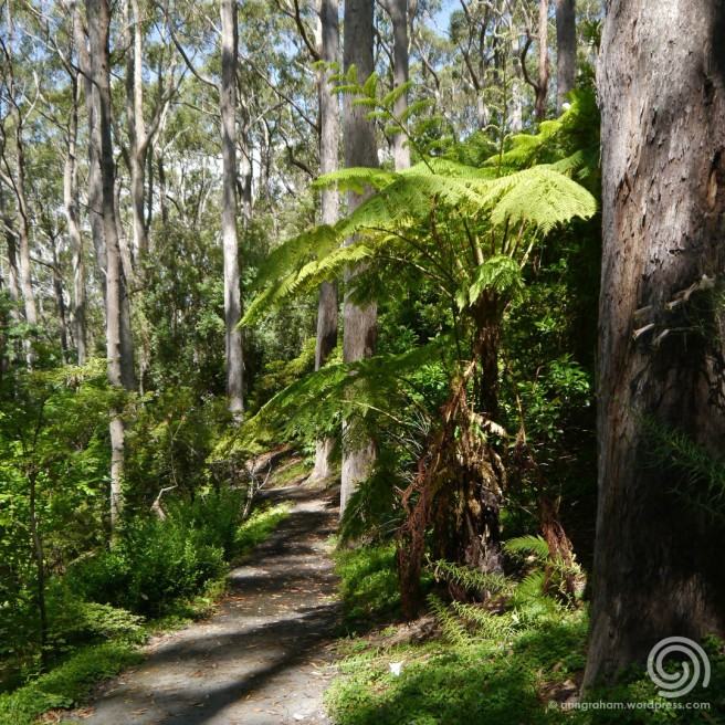 Mt Lofty Botanic Gardens - walking trail-wmk